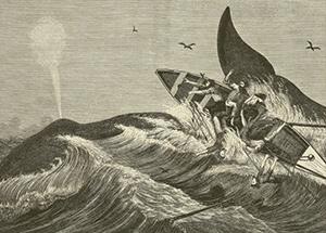 NovDec-whaling