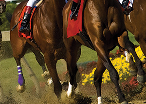 ND-horse-racing-betting